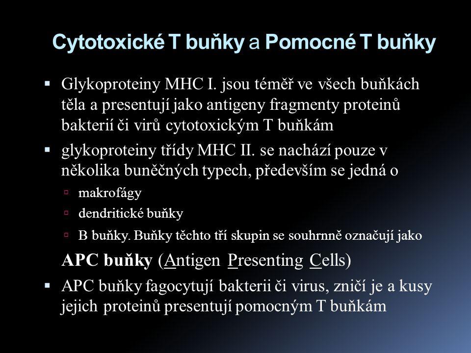 Cytotoxické T buňky a Pomocné T buňky  Glykoproteiny MHC I. jsou téměř ve všech buňkách těla a presentují jako antigeny fragmenty proteinů bakterií č