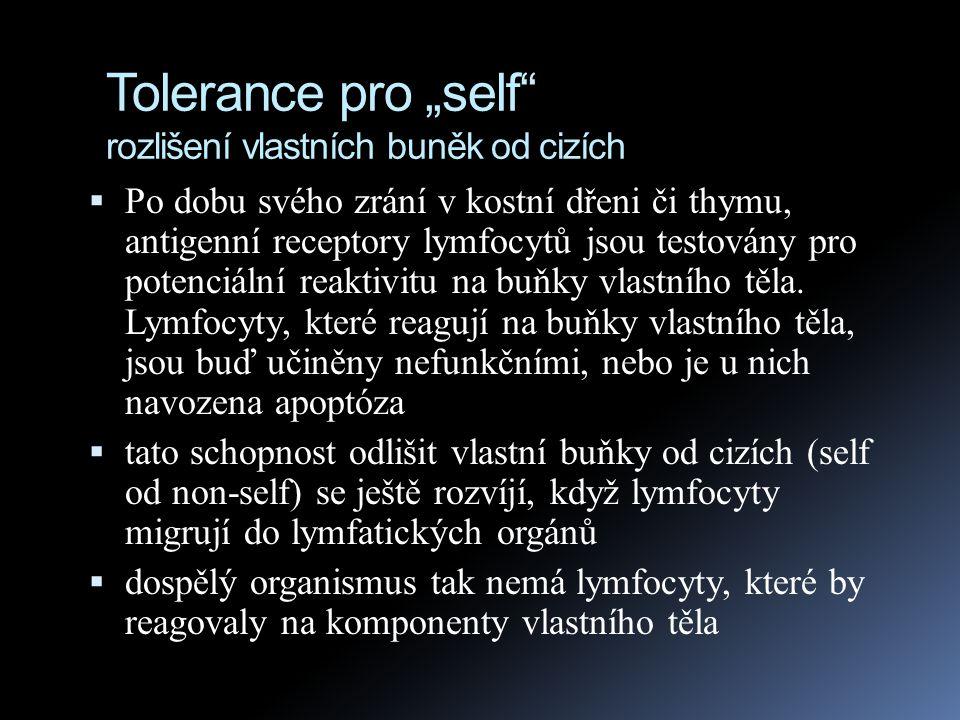 """Tolerance pro """"self rozlišení vlastních buněk od cizích  Chyby v tomto procesu vedou k autoimunitním chorobám, jako je např."""