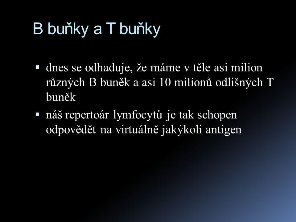 B buňky a T buňky  dnes se odhaduje, že máme v těle asi milion různých B buněk a asi 10 milionů odlišných T buněk  náš repertoár lymfocytů je tak sc