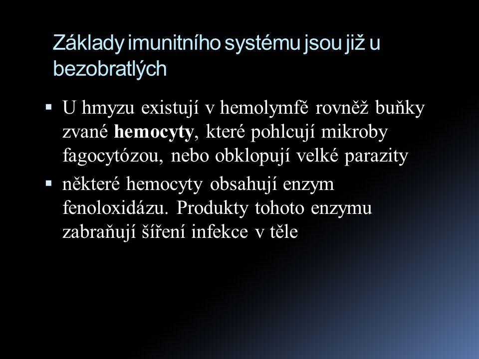Základy imunitního systému jsou již u bezobratlých  U hmyzu existují v hemolymfě rovněž buňky zvané hemocyty, které pohlcují mikroby fagocytózou, neb