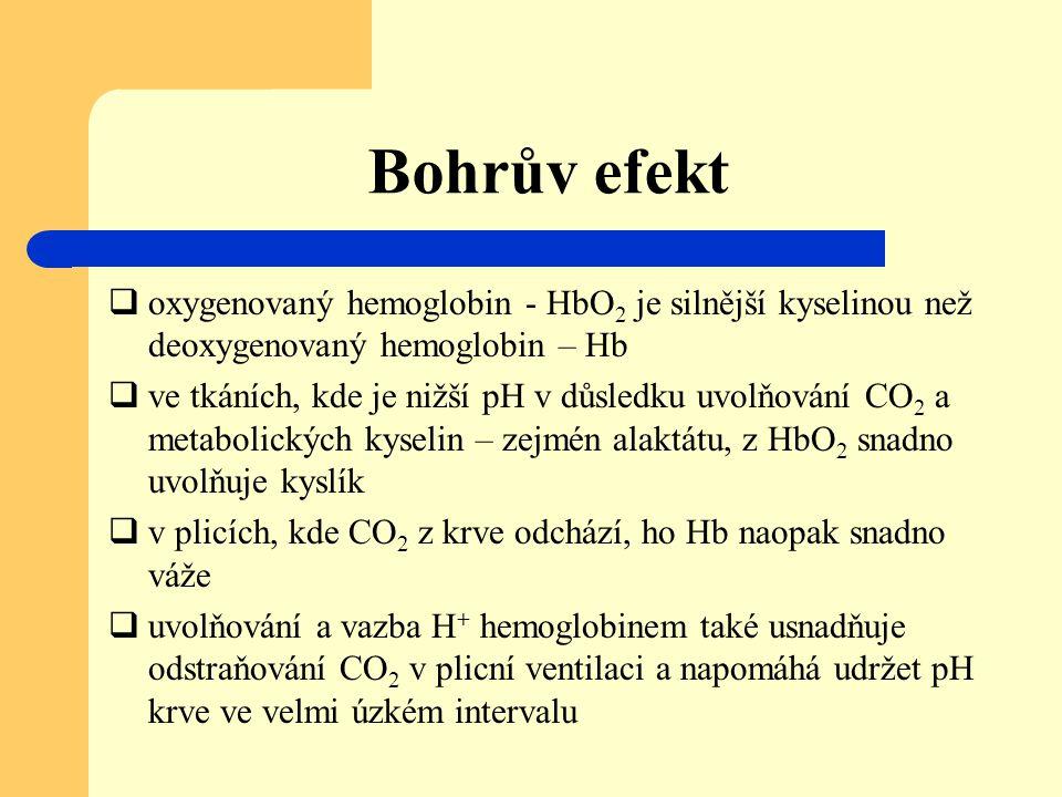 Bohrův efekt  oxygenovaný hemoglobin - HbO 2 je silnější kyselinou než deoxygenovaný hemoglobin – Hb  ve tkáních, kde je nižší pH v důsledku uvolňov