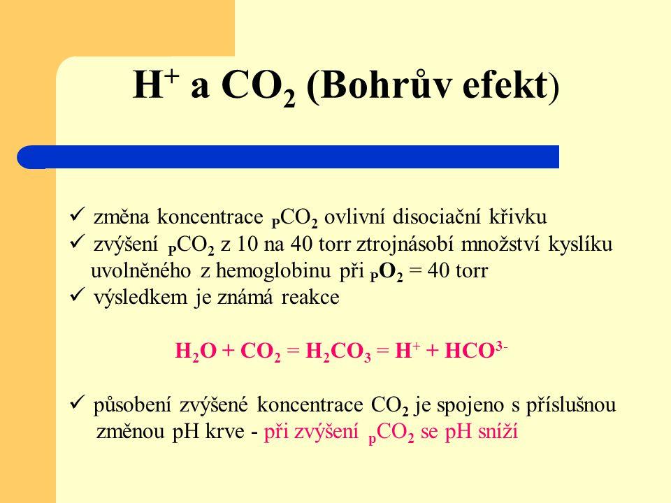 H + a CO 2 (Bohrův efekt ) změna koncentrace P CO 2 ovlivní disociační křivku zvýšení P CO 2 z 10 na 40 torr ztrojnásobí množství kyslíku uvolněného z