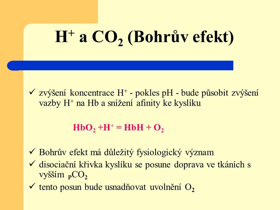 H + a CO 2 (Bohrův efekt) zvýšení koncentrace H + - pokles pH - bude působit zvýšení vazby H + na Hb a snížení afinity ke kyslíku HbO 2 +H + = HbH + O