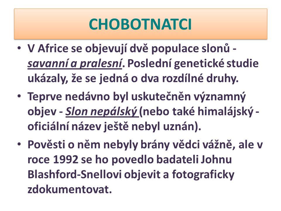 CHOBOTNATCI V Africe se objevují dvě populace slonů - savanní a pralesní. Poslední genetické studie ukázaly, že se jedná o dva rozdílné druhy. Teprve