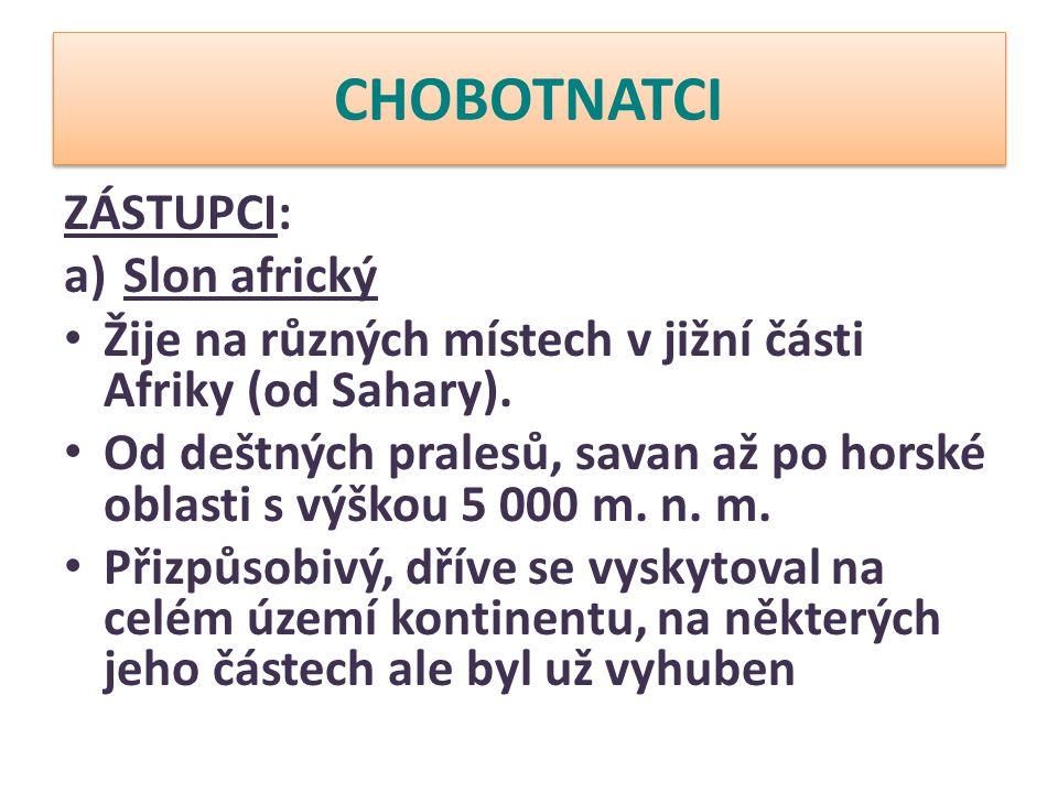 CHOBOTNATCI Délka: 7-9 metrů (samice 6,5 až 8,5 metru) Hmotnost: 6-7 tun (samice 4 tuny) Délka života: 60-80 let Rychlost: 6 km/h - 40 km/h