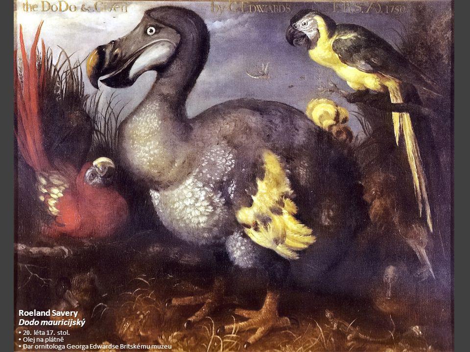 Roeland Savery Dodo mauricijský 20.léta 17. stol.
