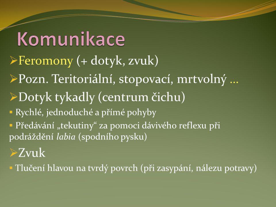  Feromony (+ dotyk, zvuk)  Pozn. Teritoriální, stopovací, mrtvolný …  Dotyk tykadly (centrum čichu)  Rychlé, jednoduché a přímé pohyby  Předávání