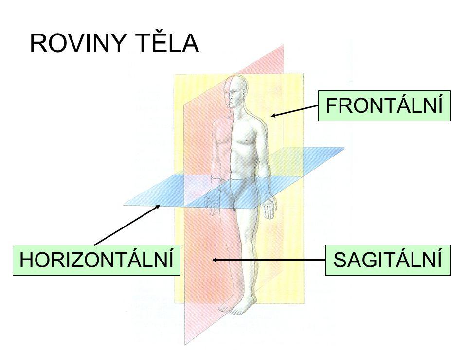 HORIZONTÁLNÍSAGITÁLNÍ FRONTÁLNÍ ROVINY TĚLA