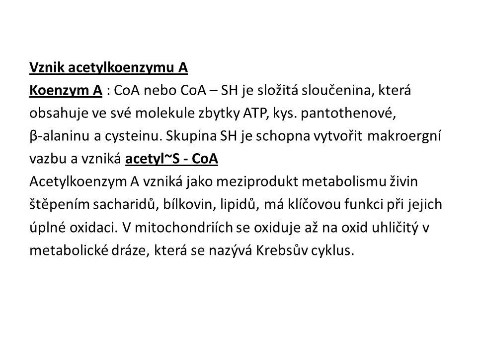 Vznik acetylkoenzymu A Koenzym A : CoA nebo CoA – SH je složitá sloučenina, která obsahuje ve své molekule zbytky ATP, kys.