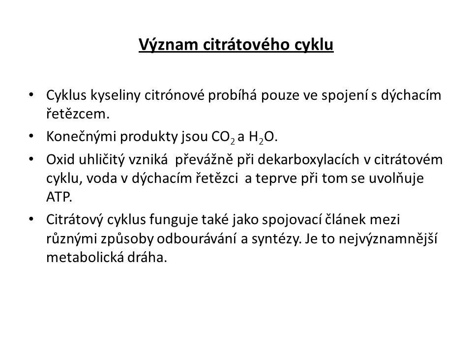 Význam citrátového cyklu Cyklus kyseliny citrónové probíhá pouze ve spojení s dýchacím řetězcem.