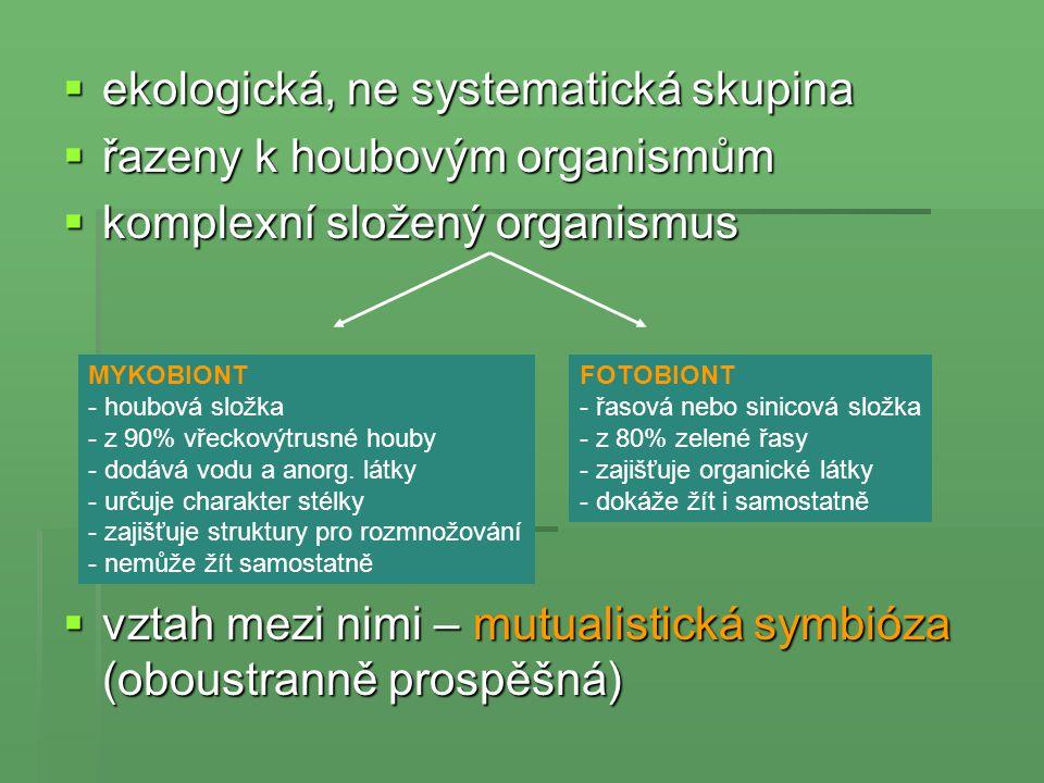  ekologická, ne systematická skupina  řazeny k houbovým organismům  komplexní složený organismus  vztah mezi nimi – mutualistická symbióza (oboust