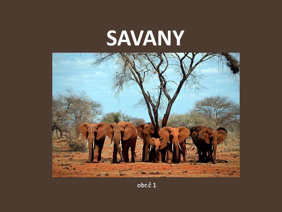 Savany typ krajiny příznačný pro tropy a subtropy (Afriku, Jižní Ameriku a část Austrálie) obr.č 2
