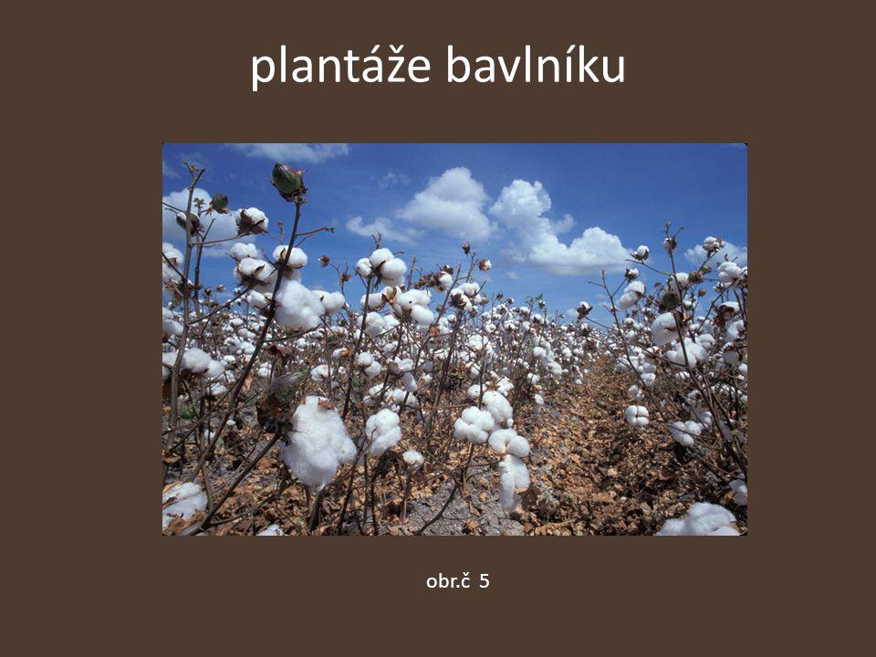 plantáže bavlníku obr.č 5