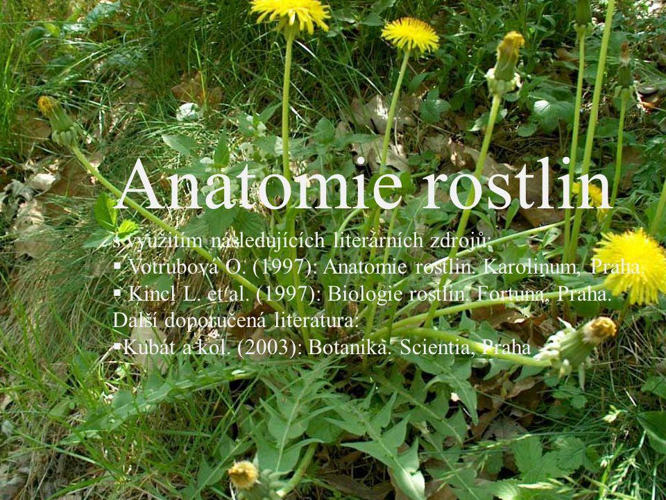 Anatomie rostlin s využitím následujících literárních zdrojů:  Votrubová O. (1997): Anatomie rostlin. Karolinum, Praha.  Kincl L. et al. (1997): Bio