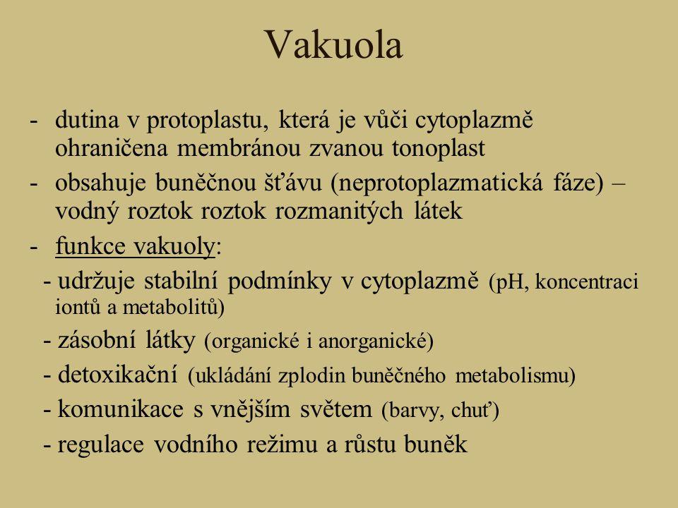 Vakuola -dutina v protoplastu, která je vůči cytoplazmě ohraničena membránou zvanou tonoplast -obsahuje buněčnou šťávu (neprotoplazmatická fáze) – vod
