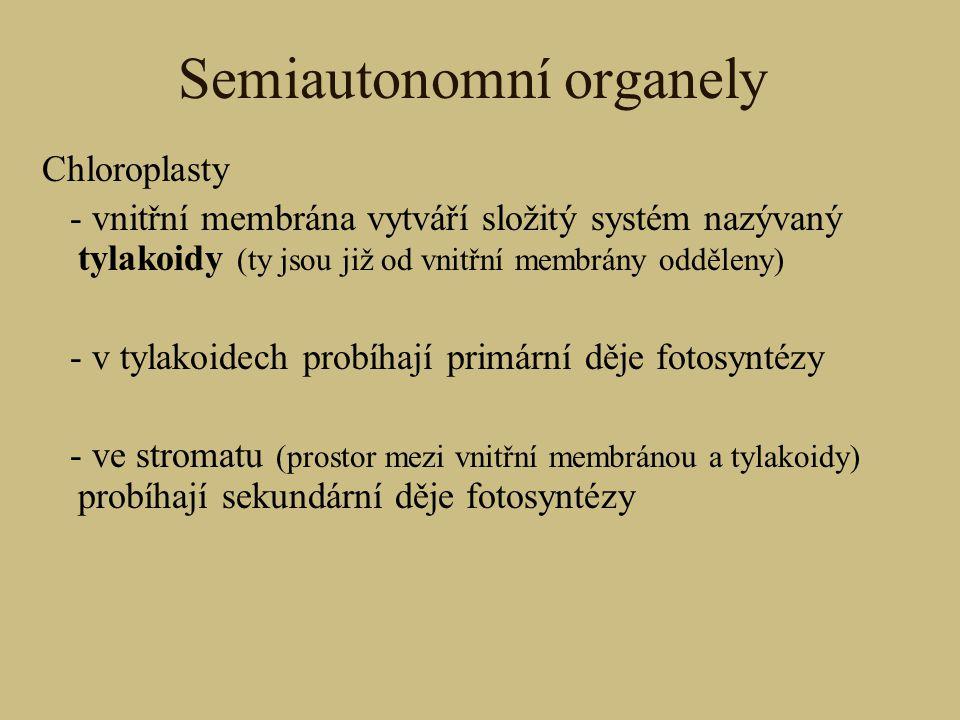 Semiautonomní organely Chloroplasty - vnitřní membrána vytváří složitý systém nazývaný tylakoidy (ty jsou již od vnitřní membrány odděleny) - v tylako