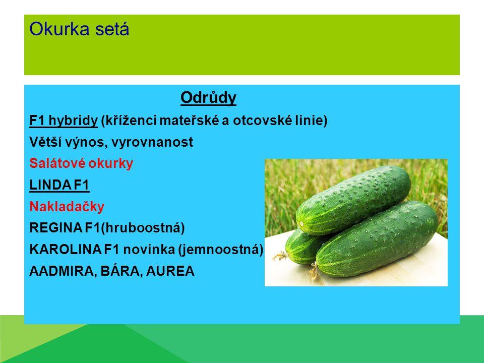Okurka setá Odrůdy F1 hybridy (kříženci mateřské a otcovské linie) Větší výnos, vyrovnanost Salátové okurky LINDA F1 Nakladačky REGINA F1(hruboostná)