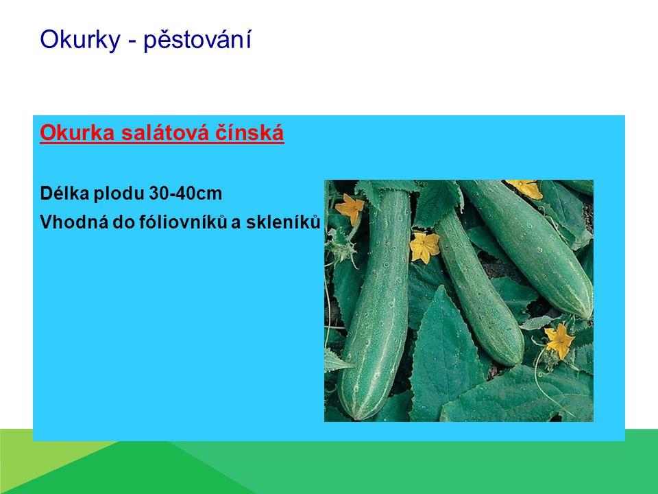 Okurky - pěstování Okurka salátová čínská Délka plodu 30-40cm Vhodná do fóliovníků a skleníků