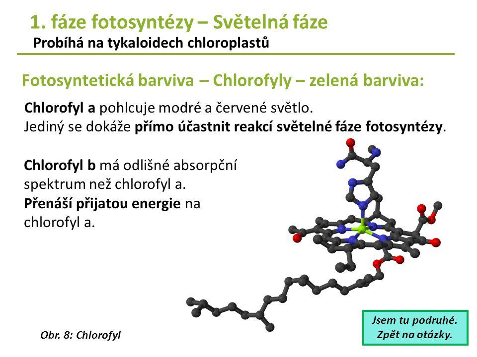 Fotosyntetická barviva – Chlorofyly – zelená barviva: Probíhá na tykaloidech chloroplastů Chlorofyl a pohlcuje modré a červené světlo. Jediný se dokáž