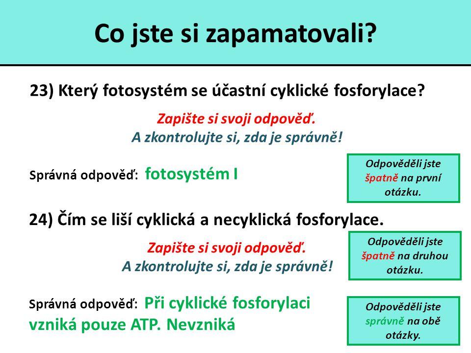 Co jste si zapamatovali? 23) Který fotosystém se účastní cyklické fosforylace? Zapište si svoji odpověď. A zkontrolujte si, zda je správně! Správná od