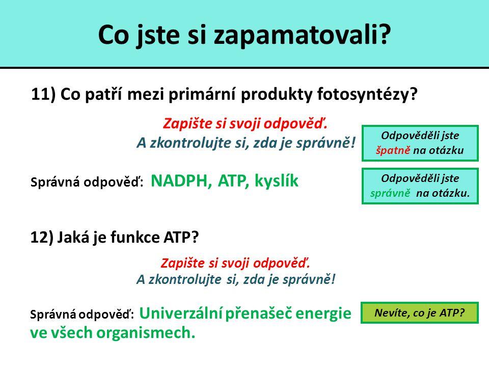 Co jste si zapamatovali? 11) Co patří mezi primární produkty fotosyntézy? Zapište si svoji odpověď. A zkontrolujte si, zda je správně! Správná odpověď