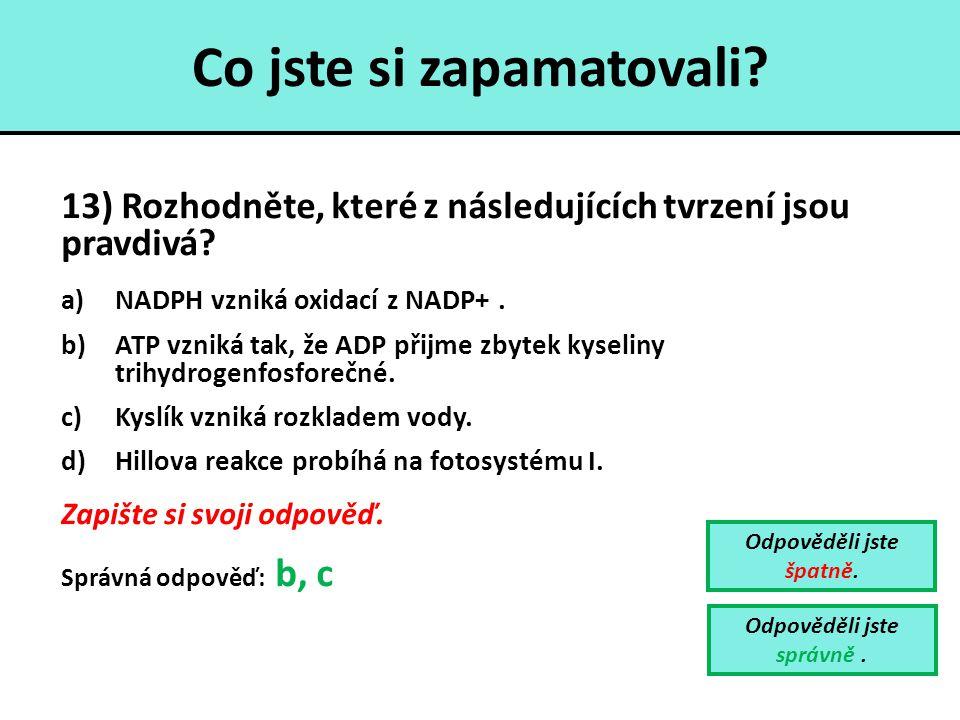 Co jste si zapamatovali? 13) Rozhodněte, které z následujících tvrzení jsou pravdivá? a)NADPH vzniká oxidací z NADP+. b)ATP vzniká tak, že ADP přijme