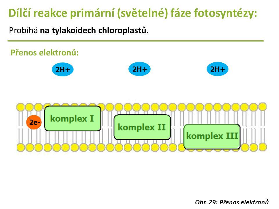 2e- 2H+ Dílčí reakce primární (světelné) fáze fotosyntézy: Probíhá na tylakoidech chloroplastů. Přenos elektronů: Obr. 29: Přenos elektronů