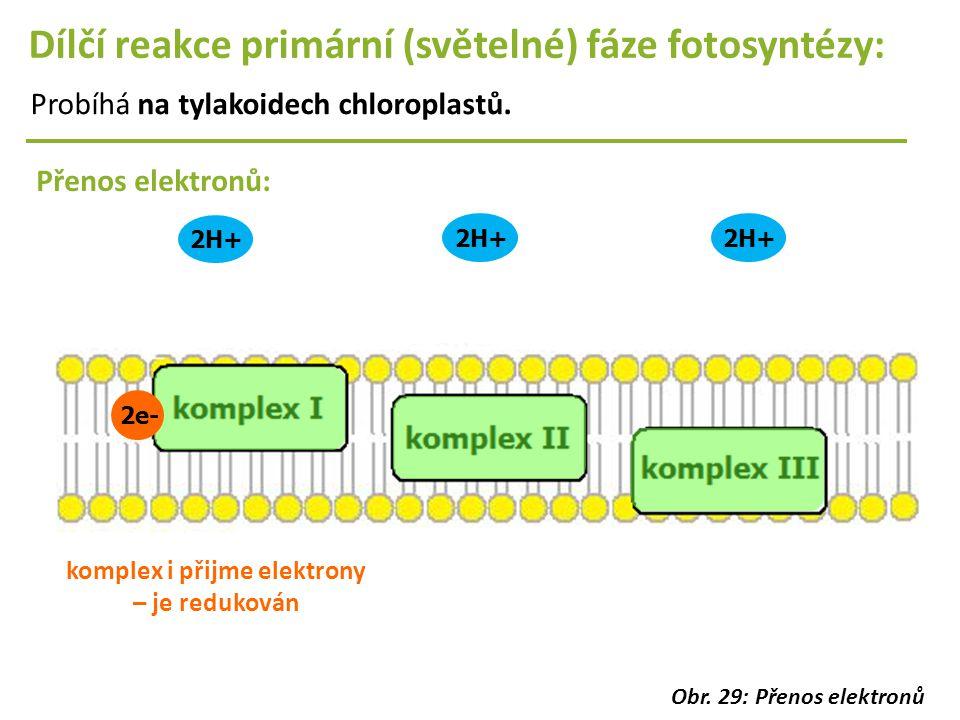 2e- 2H+ Dílčí reakce primární (světelné) fáze fotosyntézy: Probíhá na tylakoidech chloroplastů. Přenos elektronů: komplex i přijme elektrony – je redu
