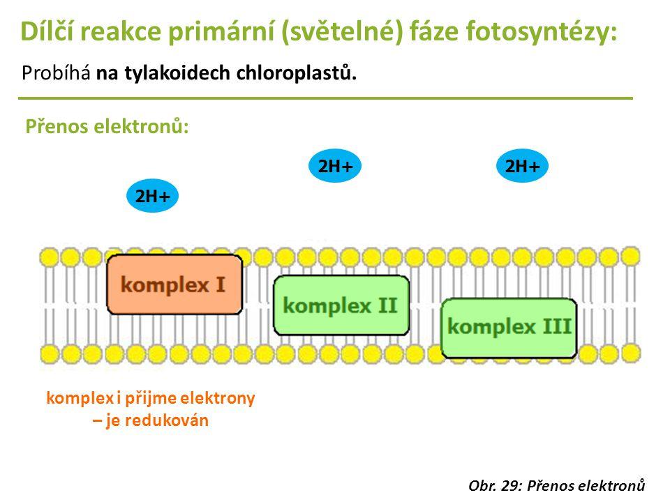 2H+ Dílčí reakce primární (světelné) fáze fotosyntézy: Probíhá na tylakoidech chloroplastů. Přenos elektronů: komplex i přijme elektrony – je reduková