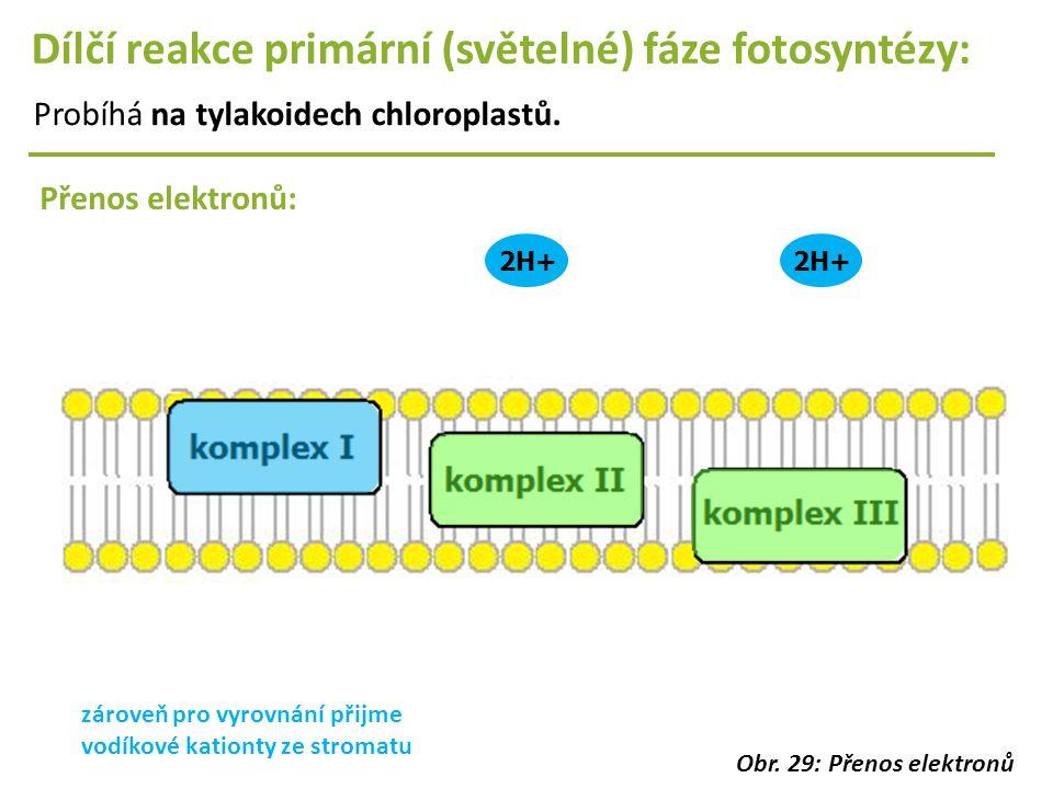 2H+ Dílčí reakce primární (světelné) fáze fotosyntézy: Probíhá na tylakoidech chloroplastů. Přenos elektronů: zároveň pro vyrovnání přijme vodíkové ka