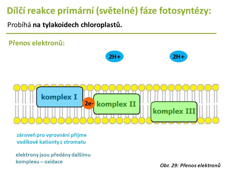2H+ Dílčí reakce primární (světelné) fáze fotosyntézy: Probíhá na tylakoidech chloroplastů. Přenos elektronů: 2e- zároveň pro vyrovnání přijme vodíkov