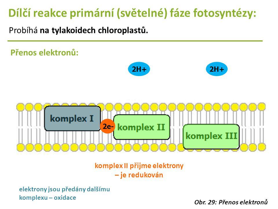 2H+ Dílčí reakce primární (světelné) fáze fotosyntézy: Probíhá na tylakoidech chloroplastů. Přenos elektronů: 2e- komplex II přijme elektrony – je red