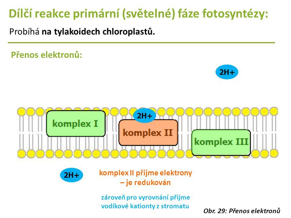 2H+ Dílčí reakce primární (světelné) fáze fotosyntézy: Probíhá na tylakoidech chloroplastů. Přenos elektronů: 2H+ komplex II přijme elektrony – je red
