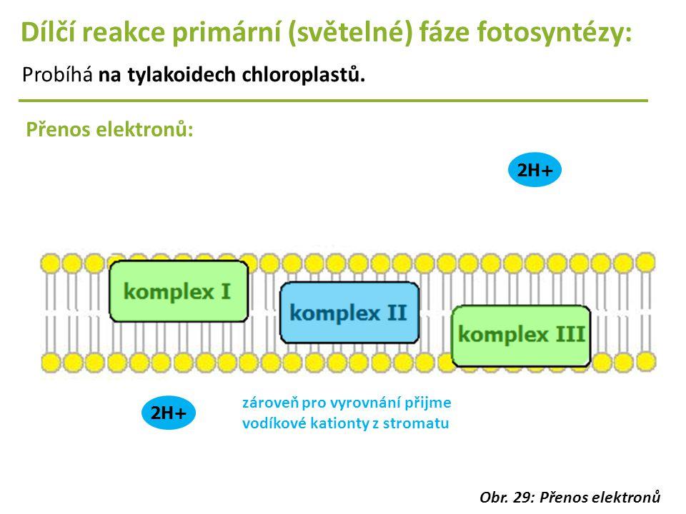 2H+ Dílčí reakce primární (světelné) fáze fotosyntézy: Probíhá na tylakoidech chloroplastů. Přenos elektronů: 2H+ zároveň pro vyrovnání přijme vodíkov