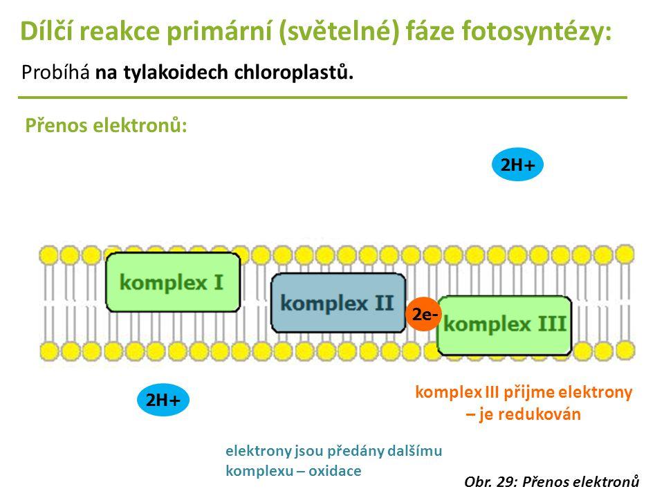 2H+ Dílčí reakce primární (světelné) fáze fotosyntézy: Probíhá na tylakoidech chloroplastů. Přenos elektronů: 2H+ 2e- komplex III přijme elektrony – j