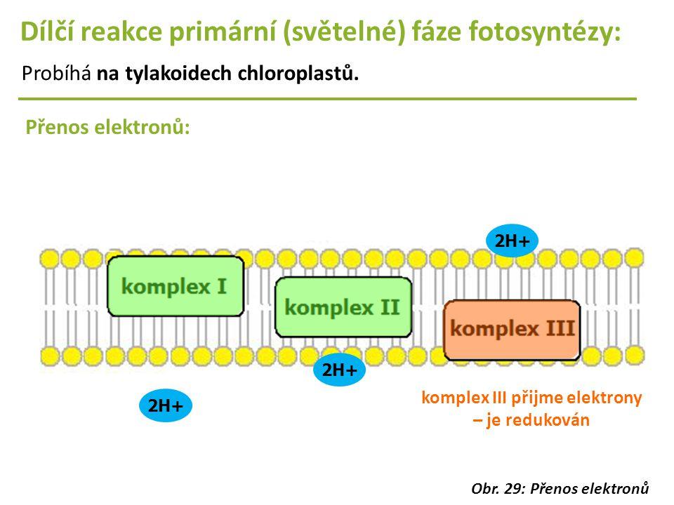 2H+ Dílčí reakce primární (světelné) fáze fotosyntézy: Probíhá na tylakoidech chloroplastů. Přenos elektronů: 2H+ komplex III přijme elektrony – je re