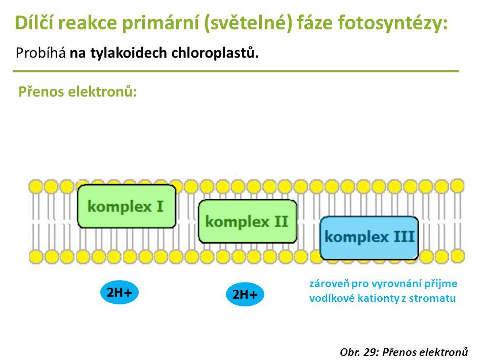 Dílčí reakce primární (světelné) fáze fotosyntézy: Probíhá na tylakoidech chloroplastů. Přenos elektronů: 2H+ zároveň pro vyrovnání přijme vodíkové ka