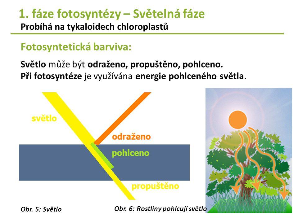 Fotosyntetická barviva: Probíhá na tykaloidech chloroplastů Světlo může být odraženo, propuštěno, pohlceno. Při fotosyntéze je využívána energie pohlc