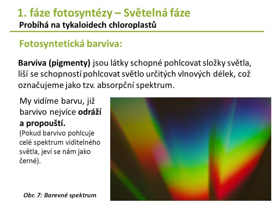 Fotosyntetická barviva: Probíhá na tykaloidech chloroplastů Barviva (pigmenty) jsou látky schopné pohlcovat složky světla, liší se schopností pohlcova