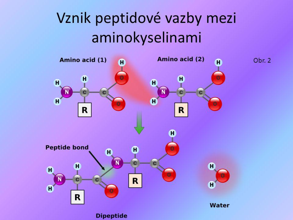 Peptidy Dělení peptidů: a)Oligopeptidy (vznikají spojením 2-10 AA) b)Polypeptidy (vznikají spojením 11-100 AA) c)Bílkoviny = Proteiny (více než 100 AA)