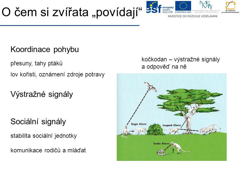 """O čem si zvířata """"povídají"""" Koordinace pohybu přesuny, tahy ptáků Výstražné signály Sociální signály stabilita sociální jednotky komunikace rodičů a m"""