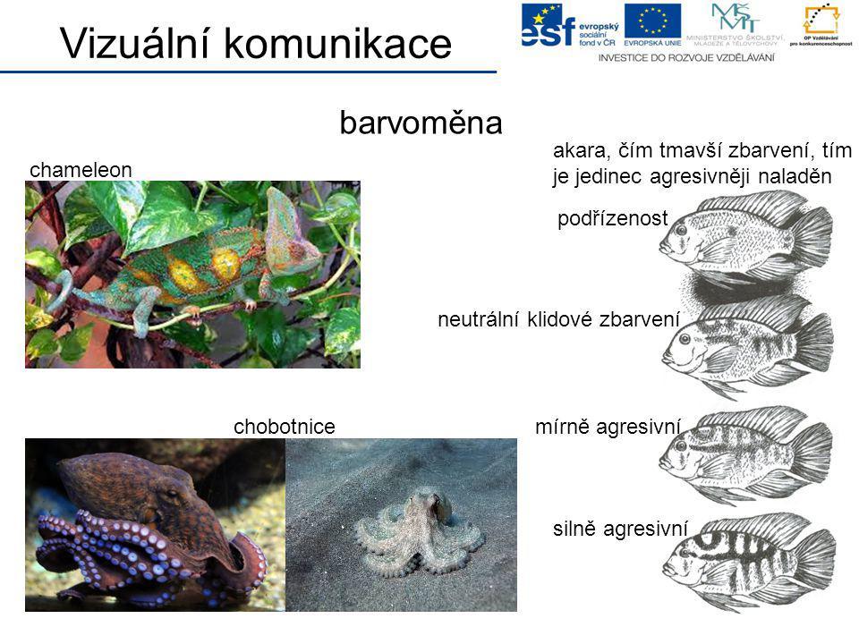 barvoměna chameleon Vizuální komunikace chobotnice akara, čím tmavší zbarvení, tím je jedinec agresivněji naladěn podřízenost neutrální klidové zbarve