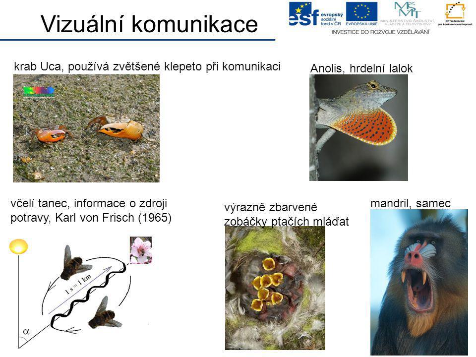 krab Uca, používá zvětšené klepeto při komunikaci Vizuální komunikace včelí tanec, informace o zdroji potravy, Karl von Frisch (1965) Anolis, hrdelní
