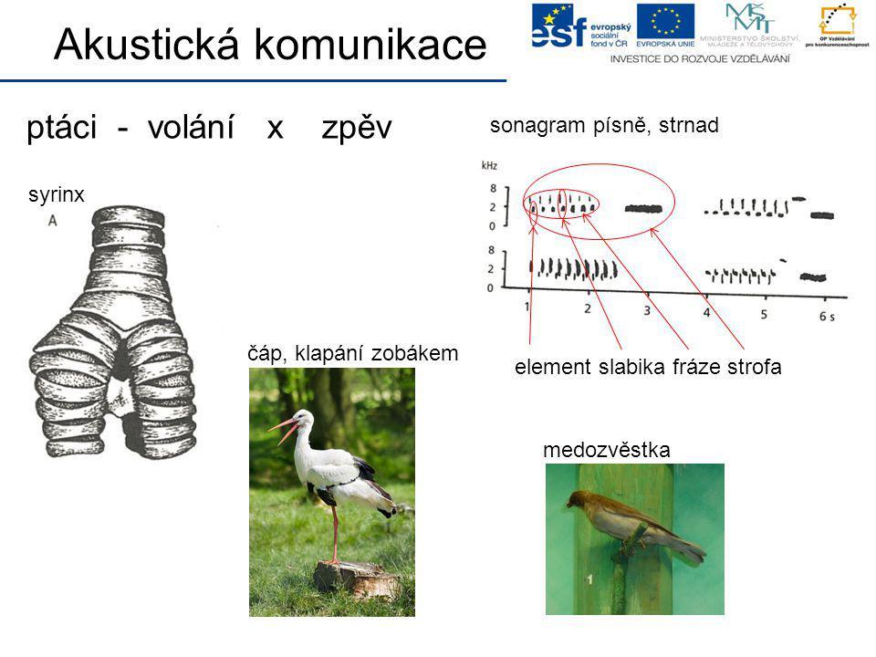 ptáci - volání x zpěv Akustická komunikace syrinx sonagram písně, strnad element slabika fráze strofa čáp, klapání zobákem medozvěstka
