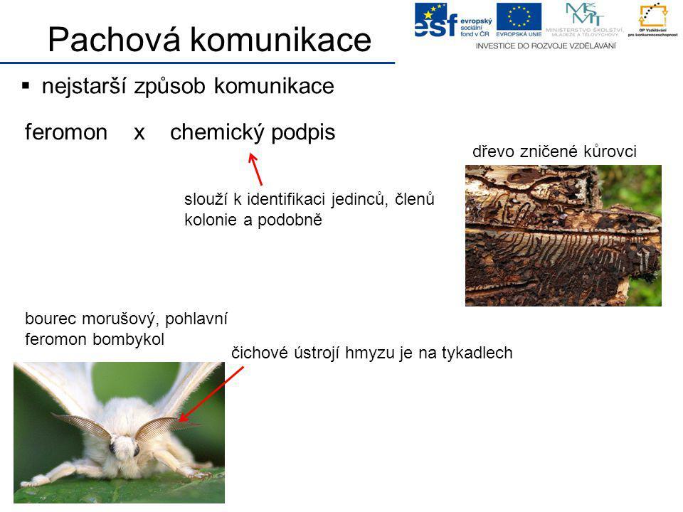 Pachová komunikace  nejstarší způsob komunikace feromon x chemický podpis slouží k identifikaci jedinců, členů kolonie a podobně dřevo zničené kůrovc