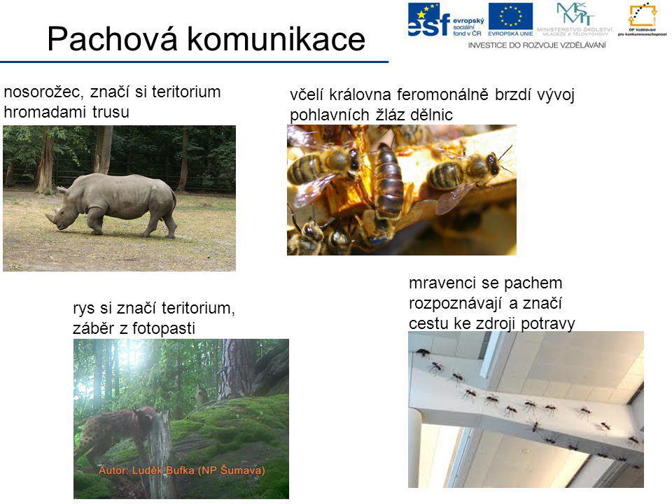 Pachová komunikace nosorožec, značí si teritorium hromadami trusu mravenci se pachem rozpoznávají a značí cestu ke zdroji potravy včelí královna ferom
