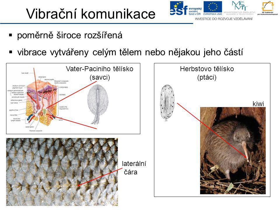 Vibrační komunikace  poměrně široce rozšířená  vibrace vytvářeny celým tělem nebo nějakou jeho částí laterální čára Herbstovo tělísko (ptáci) Vater-