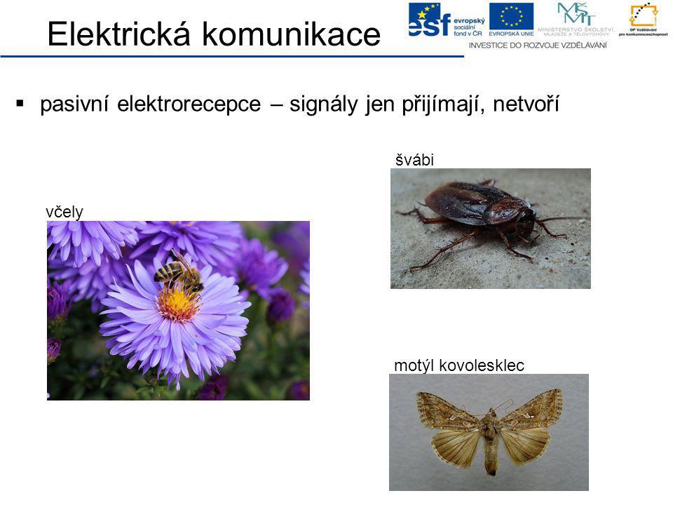 Elektrická komunikace  pasivní elektrorecepce – signály jen přijímají, netvoří včely švábi motýl kovolesklec