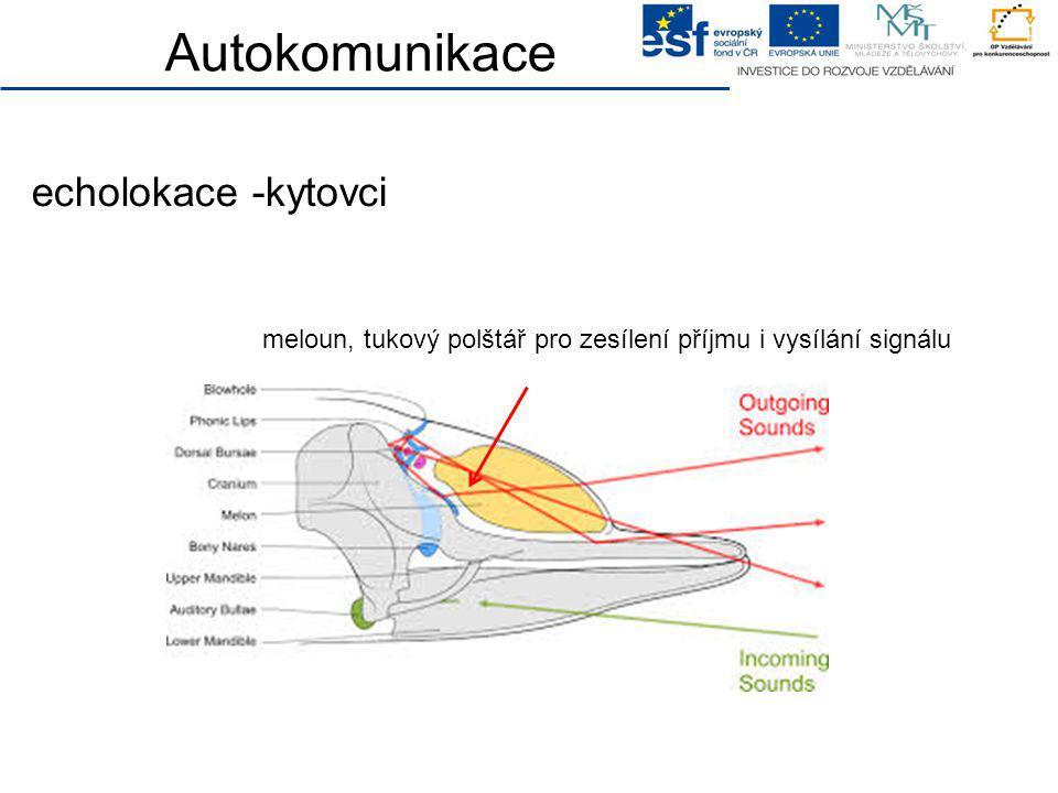 Autokomunikace meloun, tukový polštář pro zesílení příjmu i vysílání signálu echolokace -kytovci