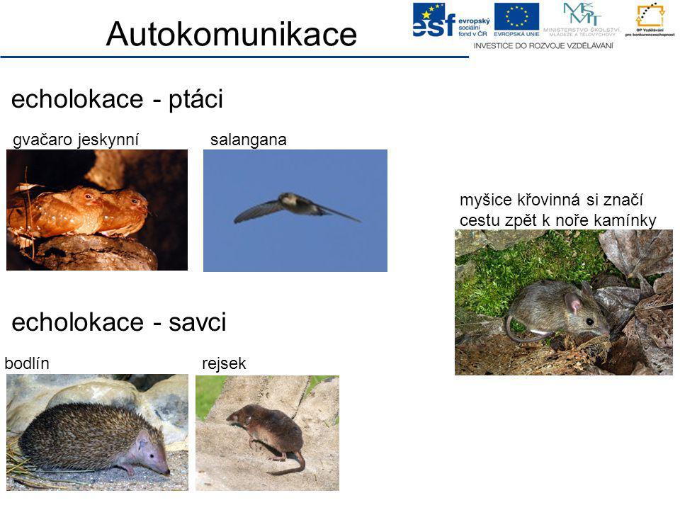 Autokomunikace echolokace - ptáci echolokace - savci salanganagvačaro jeskynní rejsekbodlín myšice křovinná si značí cestu zpět k noře kamínky